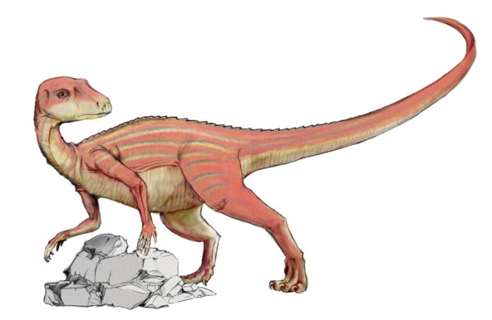 Abrictosaurus dinosaur facts