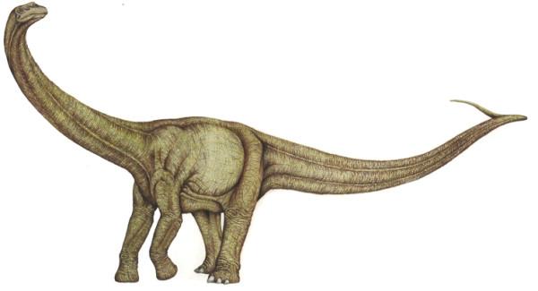alamosaurus description