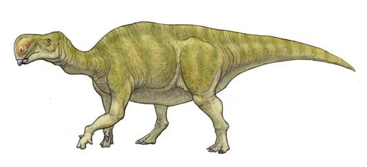 altirhinus dinosaur facts