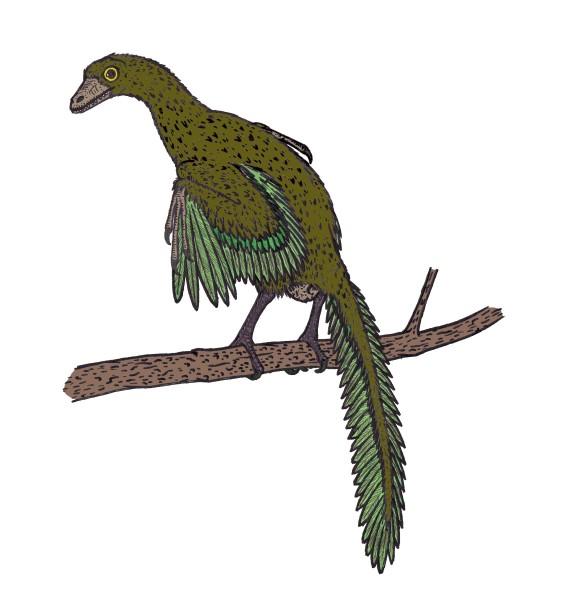 Archaeopteryx habitat