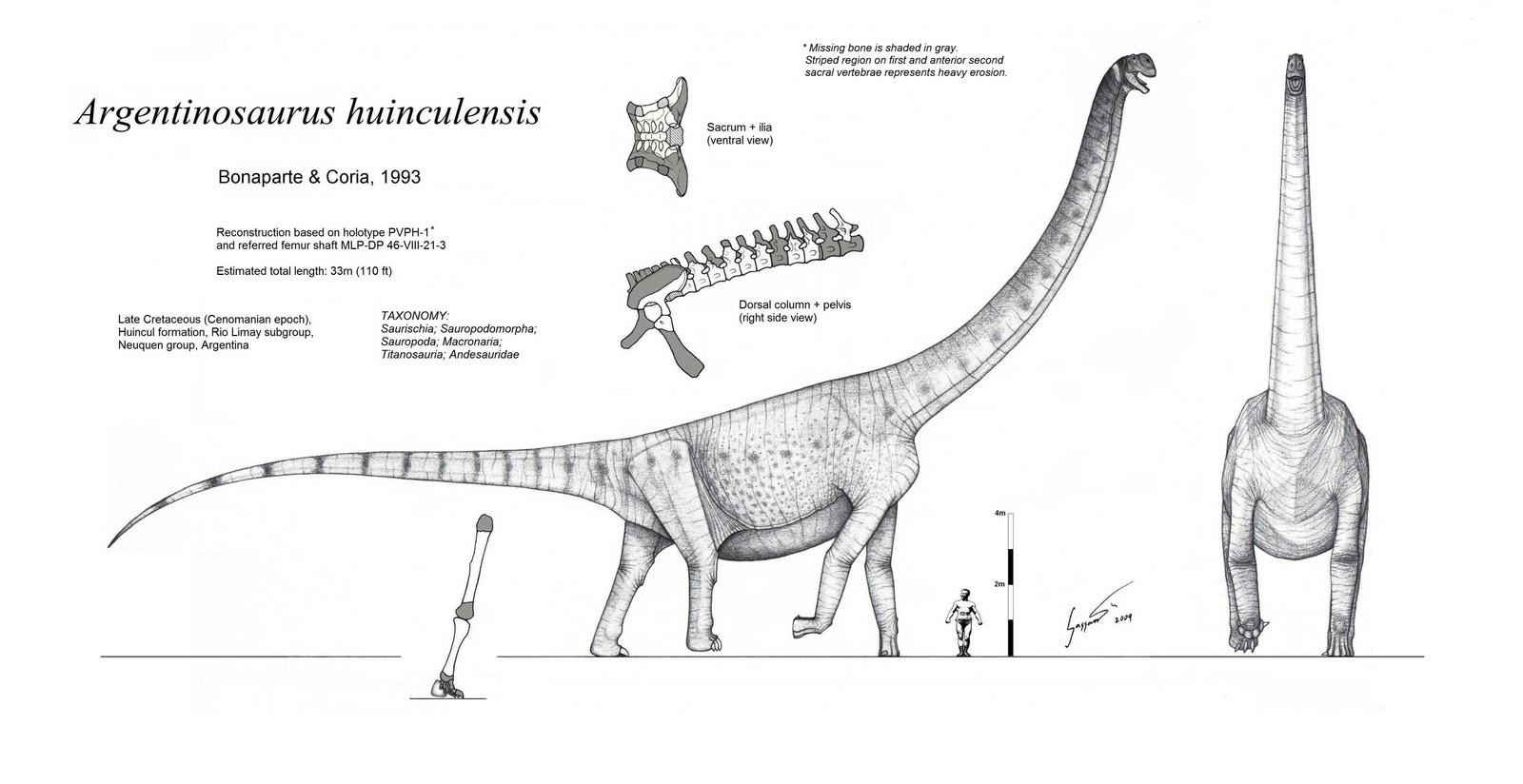 Argentinosaurus Black and White