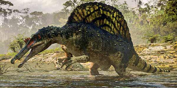 Biggest Carnivorous Dinosaurs Ever – Spinosaurus