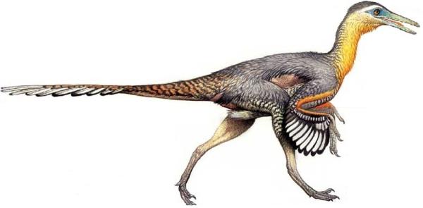 Dinosaurs Buitreraptor