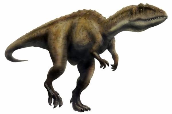 carcharodontosaurus and giganotosaurus