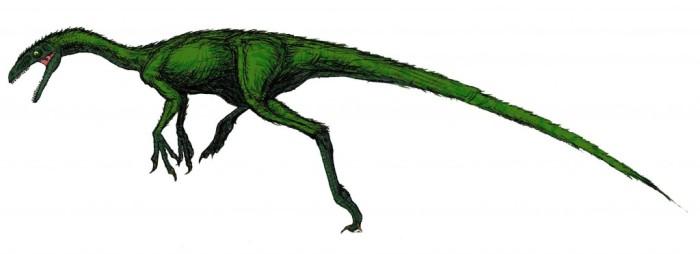 Coelurus habitat