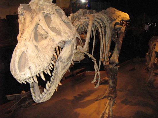 real dinosaur bones museum