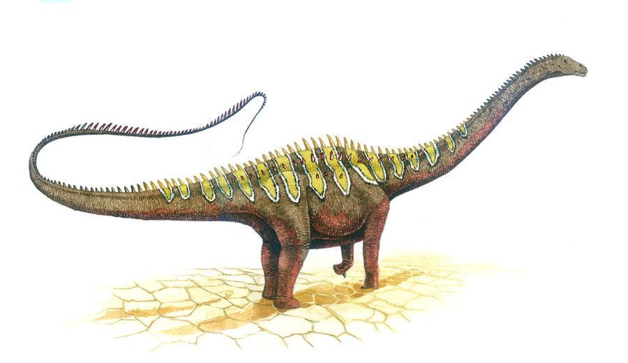 diplodocus cool facts