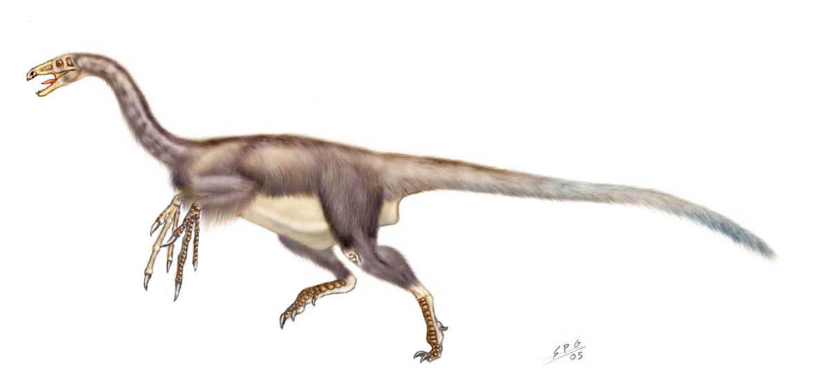 falcarius utahensis phylogeny