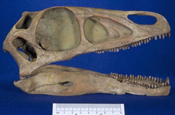 Falcarius fossils