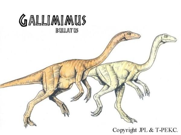 gallimimus fossils