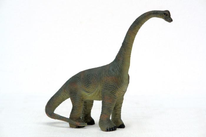 brachiosaurus facts sheet