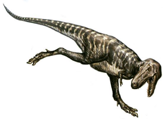 nanotyrannus vs t-rex