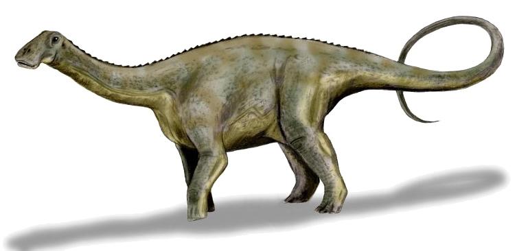 nigersaurus height