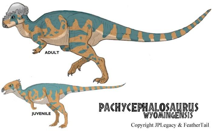 pachycephalosaurus dinosaur facts
