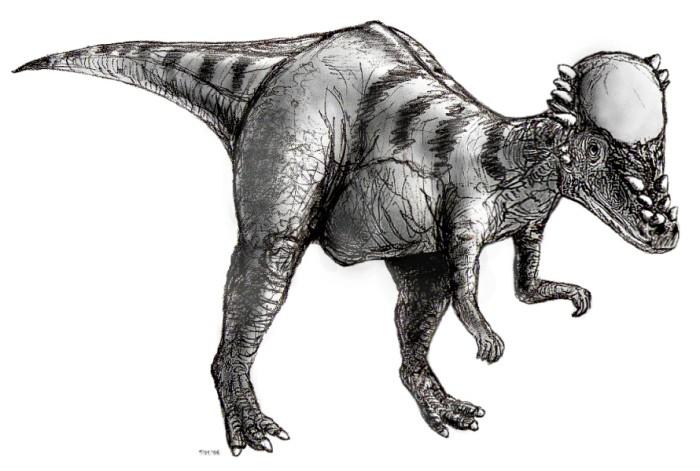pachycephalosaurus wyomingensis facts