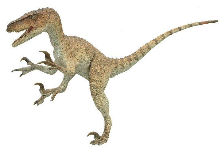 Utahraptor facts sheets