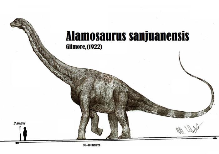 alamosaurus size