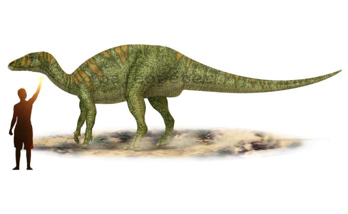 Camptosaurus size