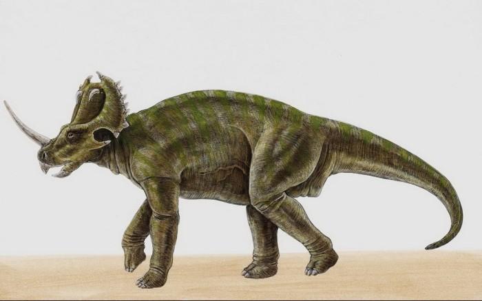 Centrosaurus wallpaper