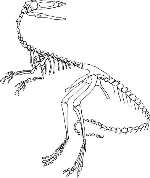 Velociraptor dinosaur skeleton coloring page