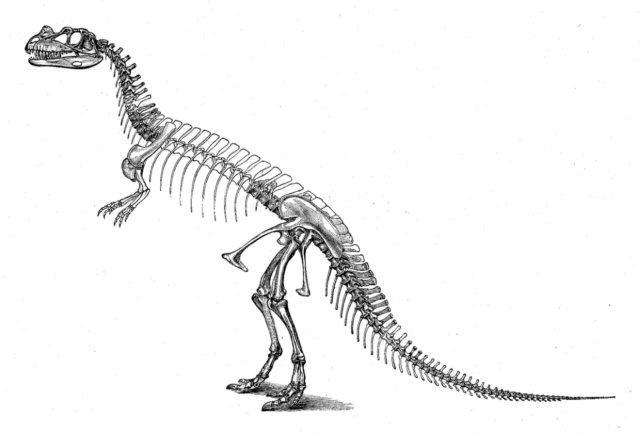 T-Rex dinosaur skeleton coloring page