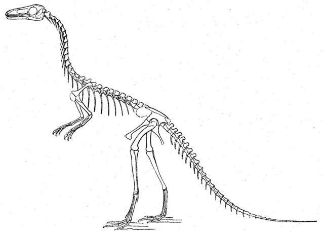 Compsognathus dinosaur skeleton coloring page