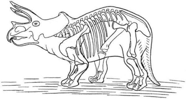 Triceratops dinosaur skeleton coloring page