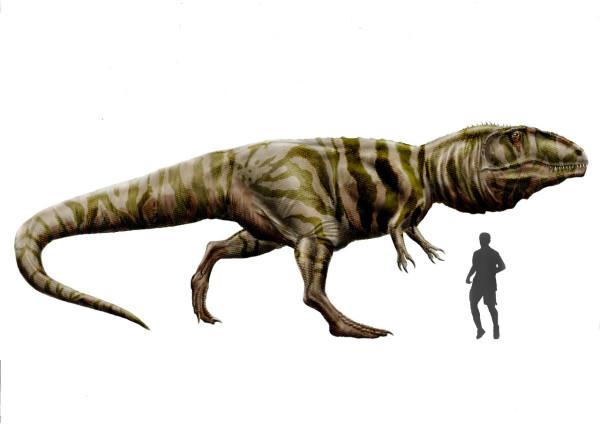 Giganotosaurus carolinii size comparison