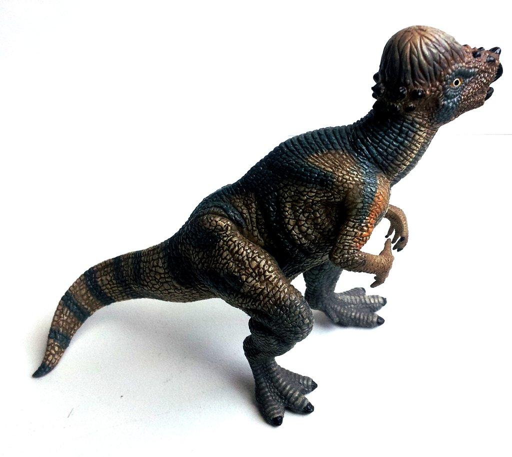 pachycephalosaurus pictures