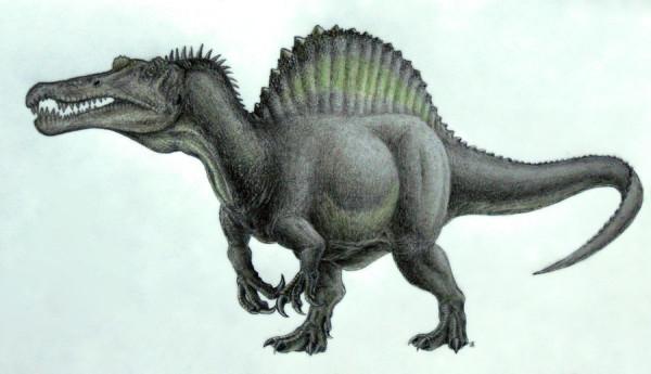 Dinosaur Bigger Than T-Rex – Spinosaurus