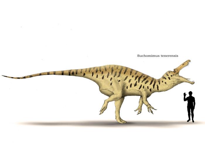 suchomimus vs carcharodontosaurus