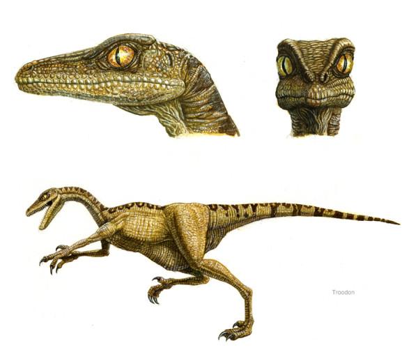 troodon fun facts