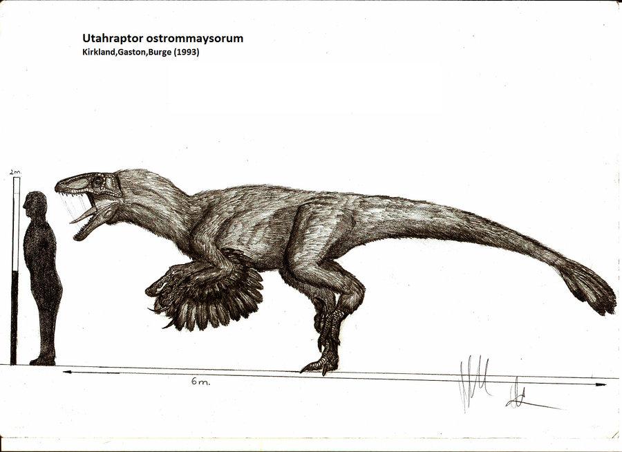 Utahraptor size