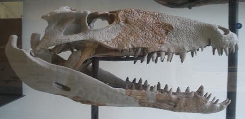 Cryptoraptor Dinosaur