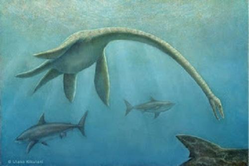 Futabasaurus Size