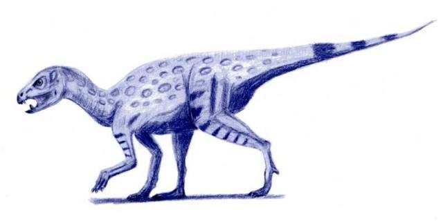 Heterodontosaurus Fact