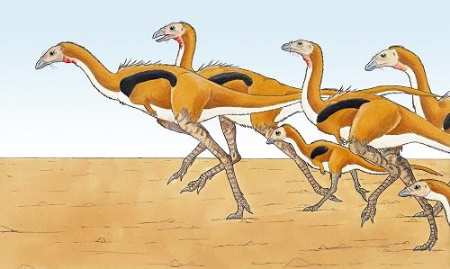 Limusaurus Dinosaur