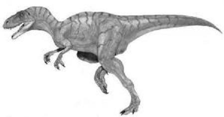 Megalosaurus Dinosaur Fact
