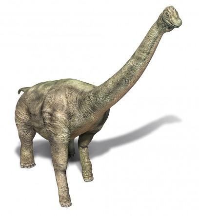 Omeisaurus Fact