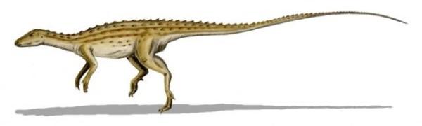 Scutellosaurus Dinosaur Facts