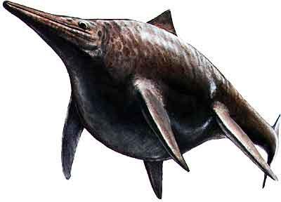 Shonisaurus Size