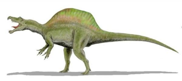 T-Rex vs Velociraptor Fact