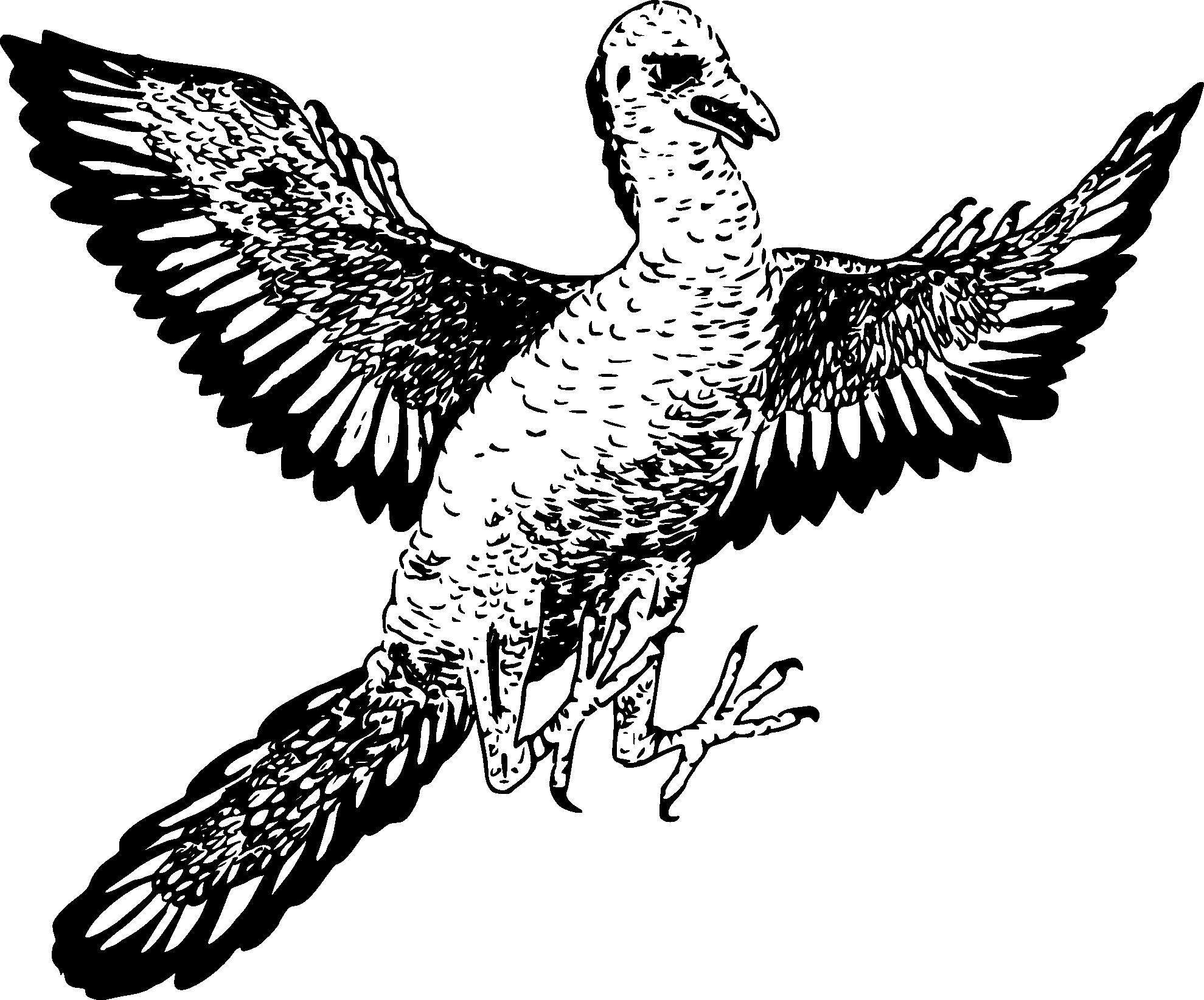 Archaeopteryx printable