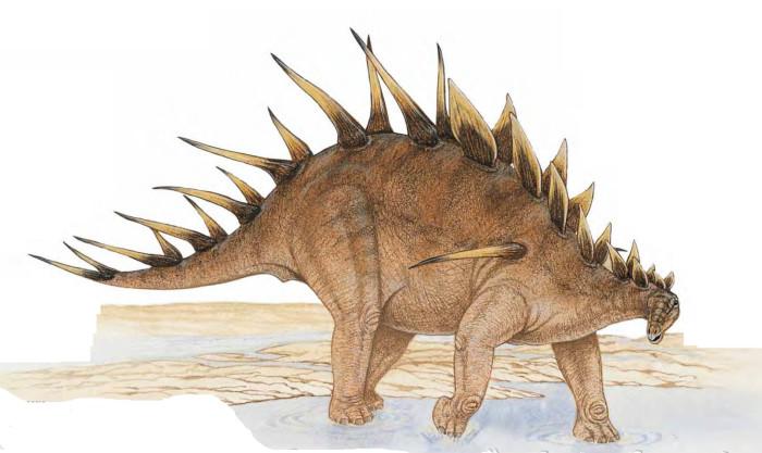kentrosaurus Dinosaurs