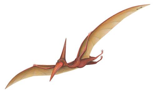 pterodactyl Noise