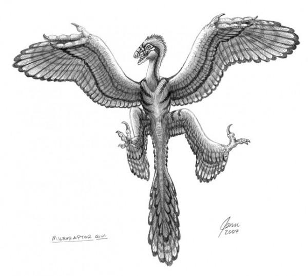 Microraptor handrawn free